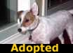 Biscuit - ADOPTED