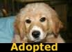 - ADOPTED