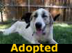 Shiloh - ADOPTED