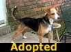 Allie - ADOPTED