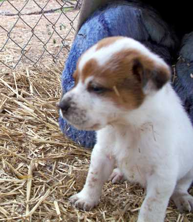 Petey - AVAILABLE