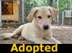 Dustin - ADOPTED