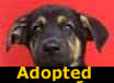 Mitchell - ADOPTED