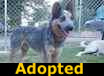 Chet - ADOPTED