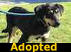 Stacy - ADOPTED