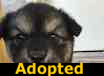 Watson - ADOPTED