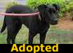 Gabby - ADOPTED