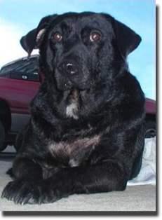 Good Cuby Chubby Adorable Dog - Alana1HTF  Collection_131513  .jpg